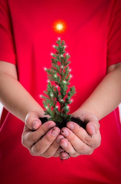 manos de la mujer sostienen pequeo rbol de navidad foto gratis - Arbol De Navidad Pequeo