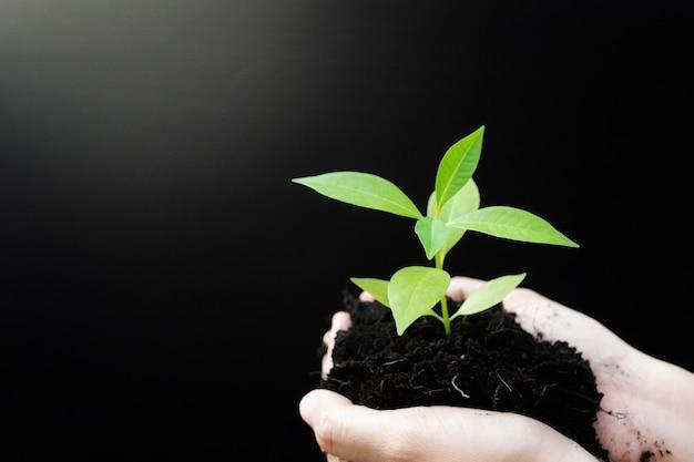 Manos femeninas sosteniendo plantas de brotes o plántulas de árboles verdes con suelo negro. Foto Premium