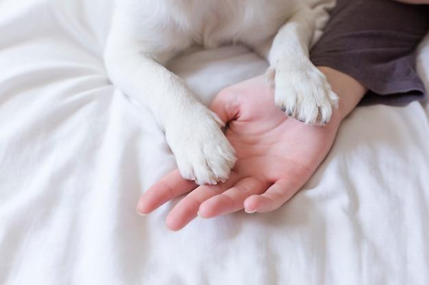 Manos de mujer tocando sus patas de perro en la hoja blanca en cama. mañana, amor por el concepto de animales. hogar, interior y estilo de vida. Foto Premium