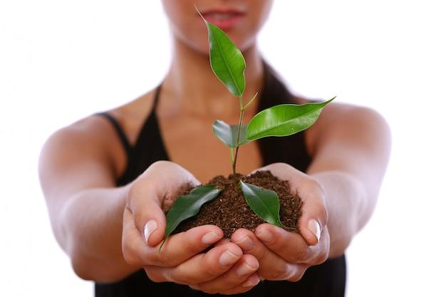Manos de mujer tomando planta verde Foto gratis