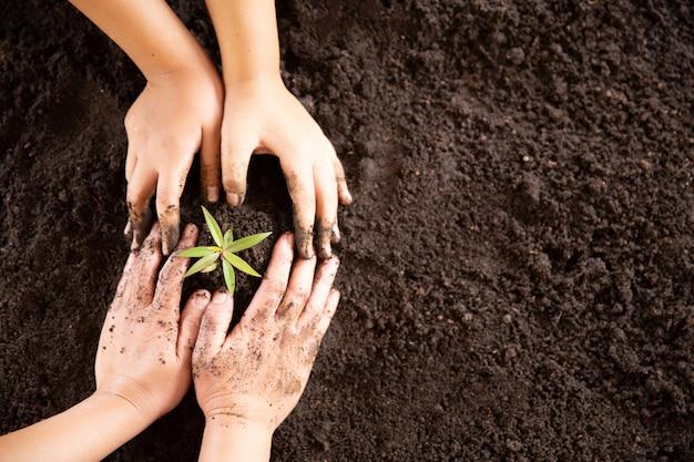 Manos de niño sosteniendo y cuidando una planta verde joven Foto gratis