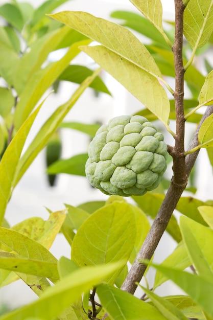 Dorable Estera De La Cocina Manzana Verde Bosquejo - Ideas de ...