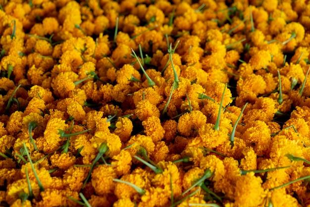 La maravilla de la flor amarilla es un símbolo de la prosperidad. las creencias de tailandia. Foto Premium