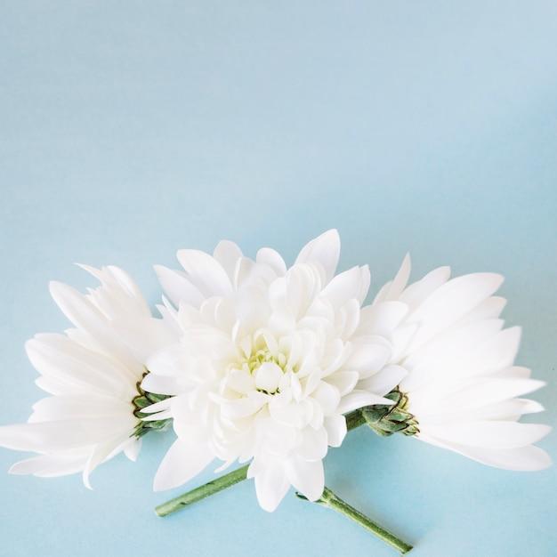 Maravillosas flores blancas puras | Descargar Fotos gratis