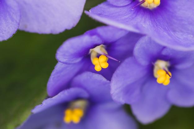 Maravillosas flores púrpuras exóticas Foto gratis