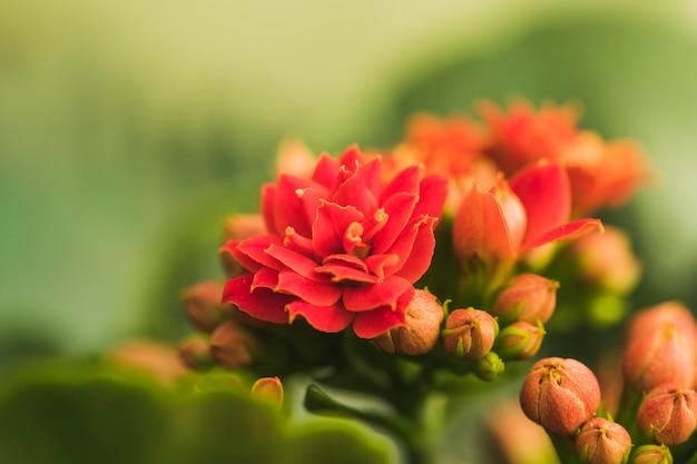 Maravillosas flores rojas exóticas Foto gratis