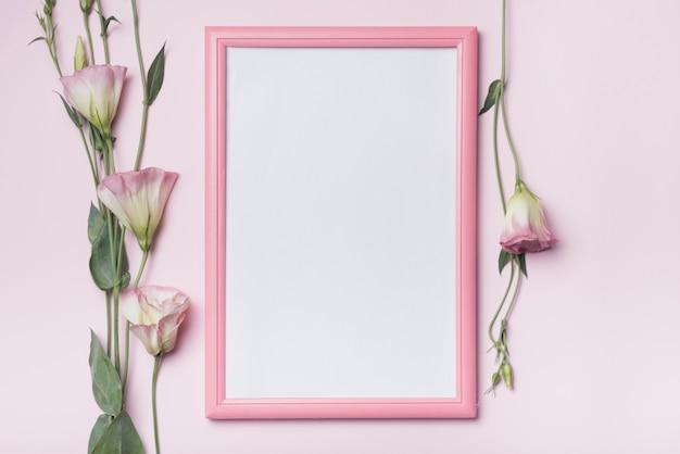 Marco blanco con flores eustoma sobre fondo rosa. Foto gratis