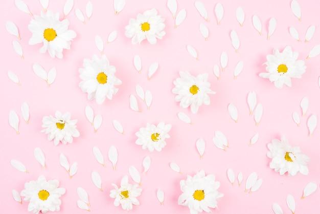 Marco Completo De Flores Blancas Con Petalos Sobre Fondo Rosa