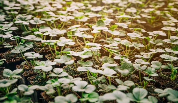 Marco completo de pequeñas plantas de plántulas verdes Foto gratis