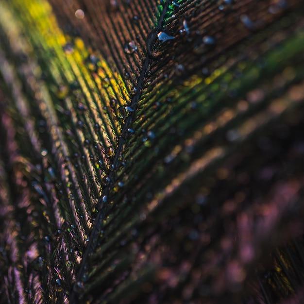 Marco completo de plumas de pavo real brillante colorido con gotas de agua Foto gratis