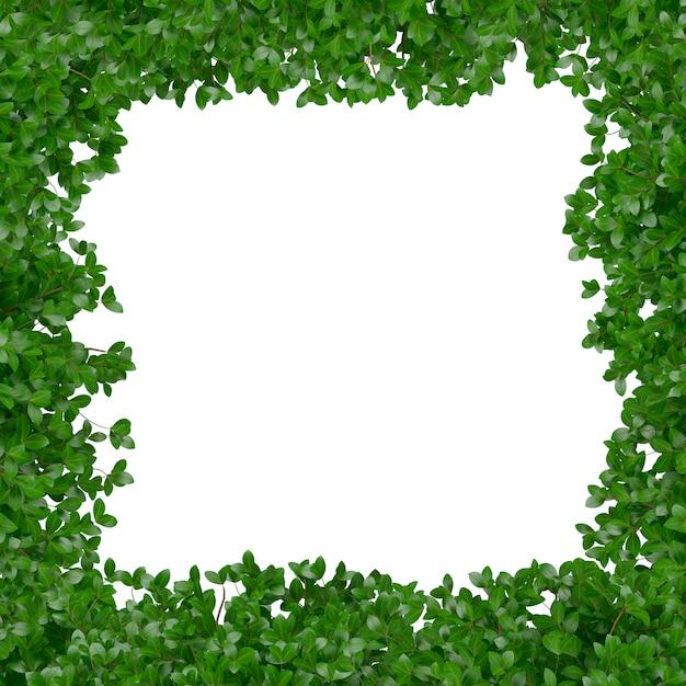 Marco con hojas verdes | Descargar Fotos gratis
