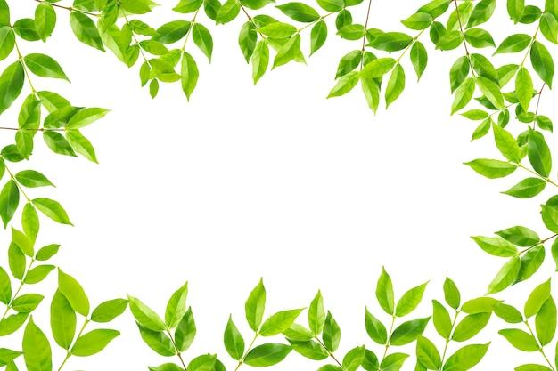 Fondo Blanco Con Verde: Marco De Hojas Verdes Aislado Sobre Fondo Blanco