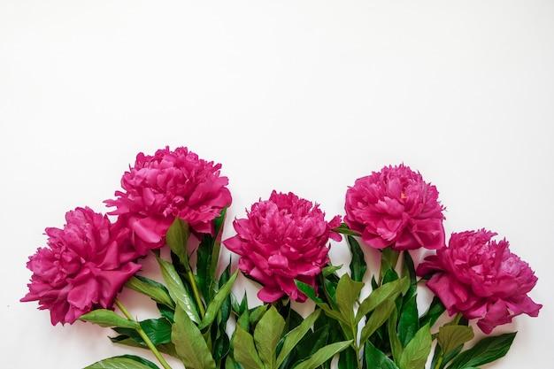 Marco de flores con ramas frescas de peonía rosa aislado en blanco con espacio de copia Foto Premium
