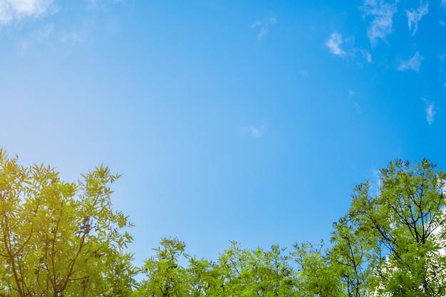 Un marco de hojas contra el cielo. Foto Premium