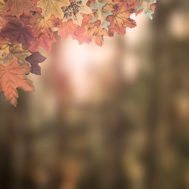 Marco de hojas de otoño diseñado sobre fondo borroso Foto gratis