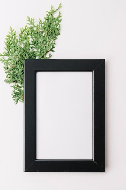 Marco de madera en blanco con la ramita del cedro aislada en el fondo blanco Foto gratis