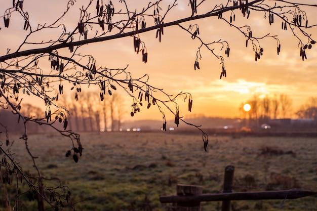 Marco vintage de árboles en el fondo colorido paisaje al atardecer Foto Premium