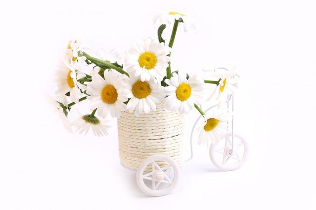 Margarita Flores Macetas Bicicleta Primavera Amor Tierno Día