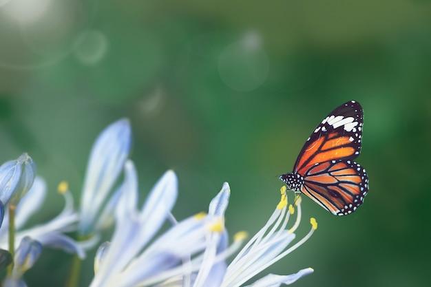 Mariposa en la naturaleza Foto gratis