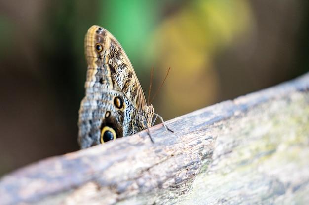 Mariposas tropicales de colores Foto Premium