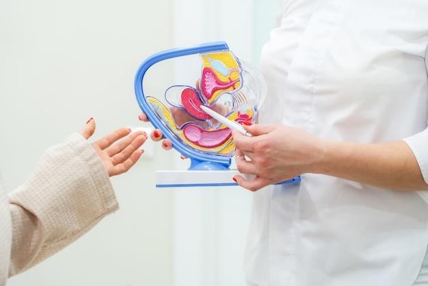 Médico ginecólogo consulta paciente usando modelo de anatomía del útero Foto Premium
