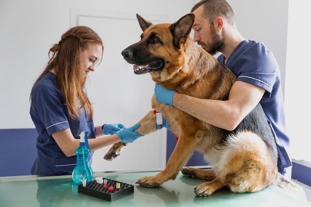 Médicos de tiro medio que ayudan a que el perro grande se mejore Foto gratis