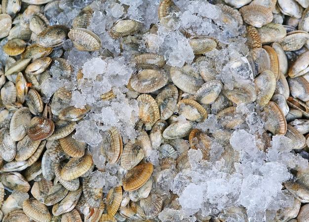 Mejillones frescos con hielo | Descargar Fotos premium