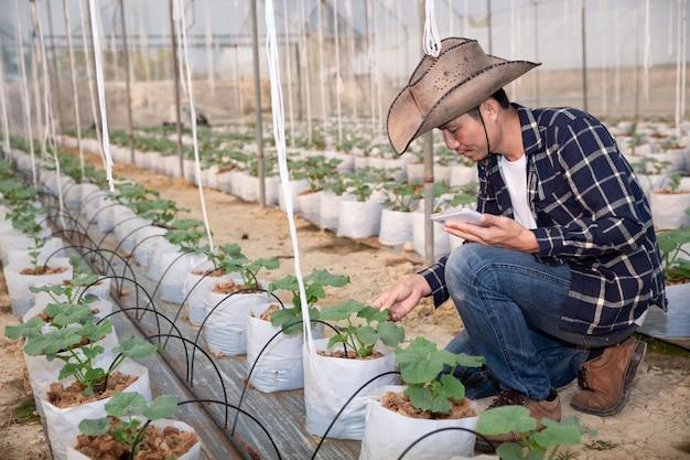 Melón verde joven o melón que crece en el invernadero Foto gratis