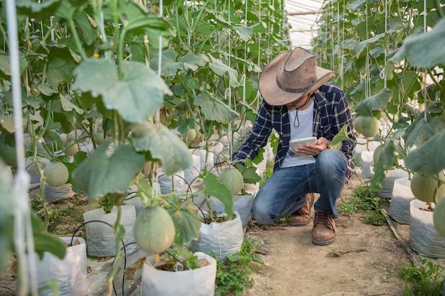 Melones en el jardín, hombre de yong que sostiene el melón en una granja de melones en invernadero. Foto gratis