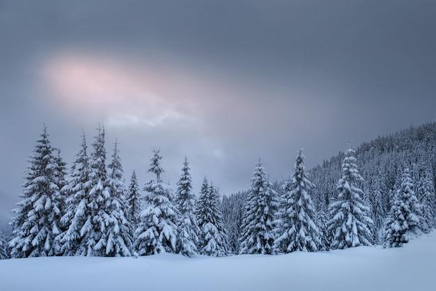 Misterioso paisaje de invierno, majestuosas montañas con árboles cubiertos de nieve. tarjeta de felicitación con foto. cárpatos ucrania europa Foto gratis