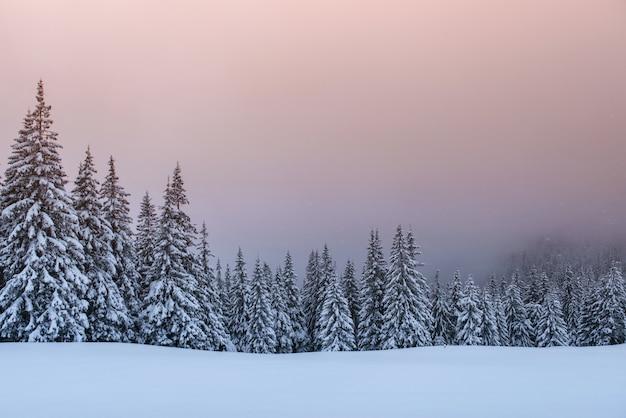Misterioso paisaje de invierno, majestuosas montañas con árboles cubiertos de nieve. Foto gratis