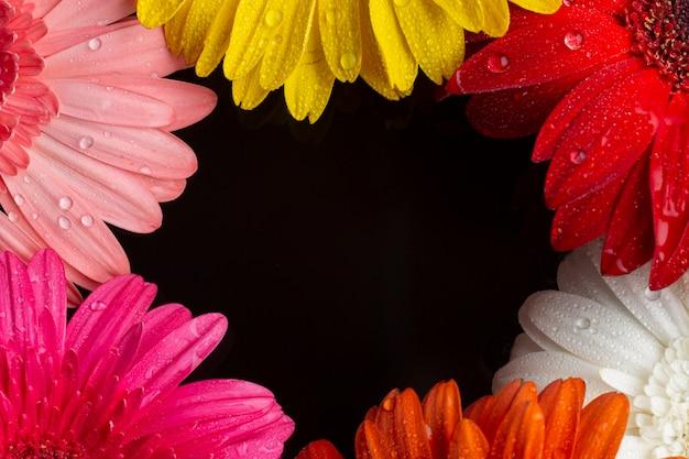 Mitades de primer plano de flores de gerbera con espacio de copia Foto gratis