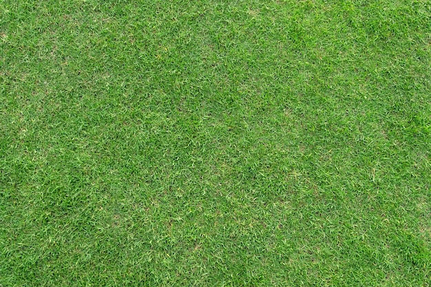 Modelo y textura de la hierba verde para el fondo. Foto Premium