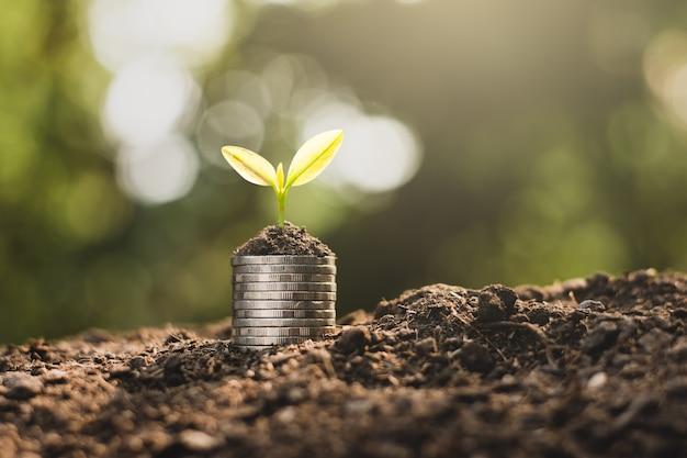 Las monedas se apilan en el suelo y las plantas de semillero crecen en la parte superior. Foto Premium
