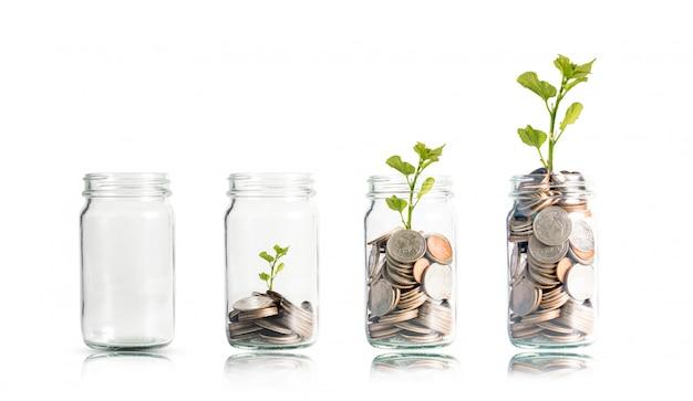 Monedas de dinero y árbol que crece en frasco. Foto Premium