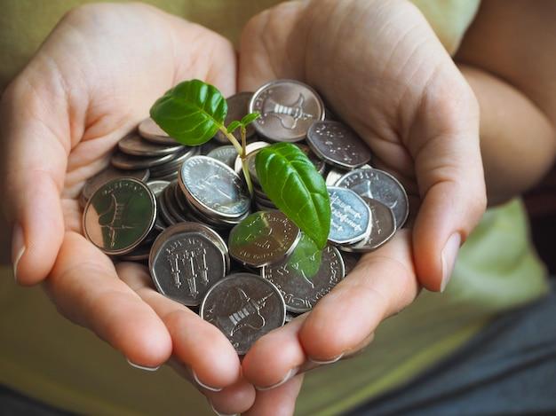 Monedas de los eau. monedas y planta verde en las palmas. Foto Premium