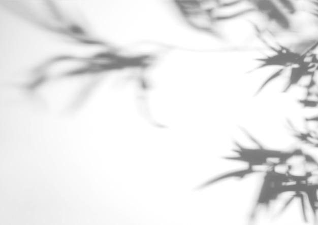 Monstera borrosa deja sombra sobre fondo blanco Foto gratis