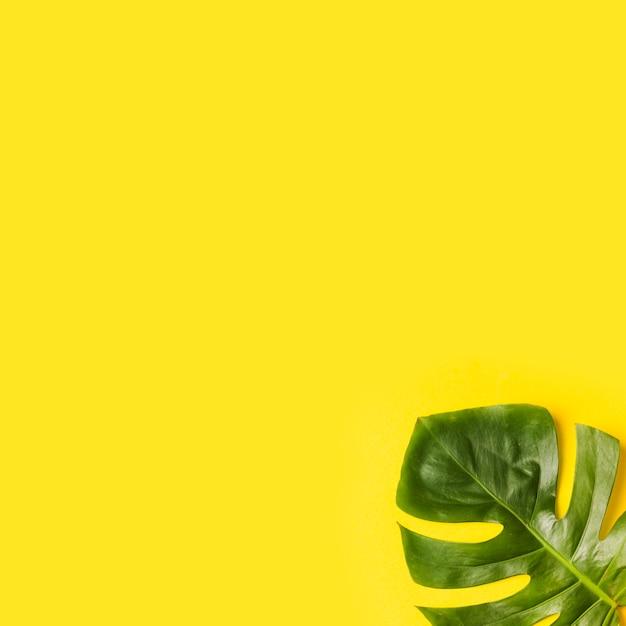 Monstera verde deja en la esquina de fondo amarillo Foto gratis