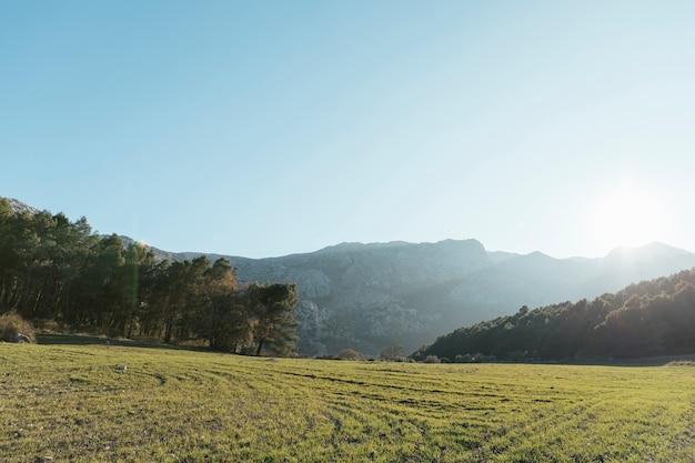 Montaña pedregosa con paisaje de árboles en la luz del sol Foto gratis