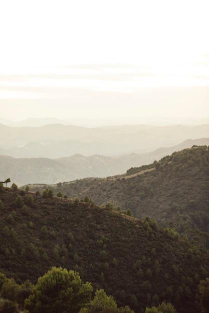 Montañas de bosque con cielo blanco Foto gratis
