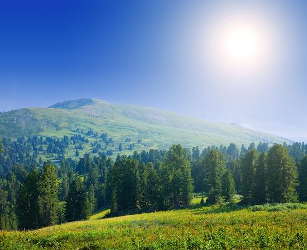Montañas Del Bosque En Día Soleado
