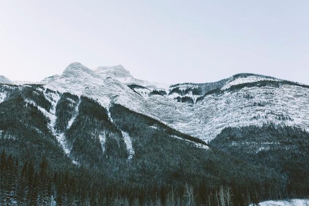 Montañas nevadas con pinos Foto gratis