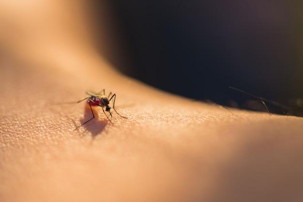 Mosquitos chupadores de sangre Foto Premium