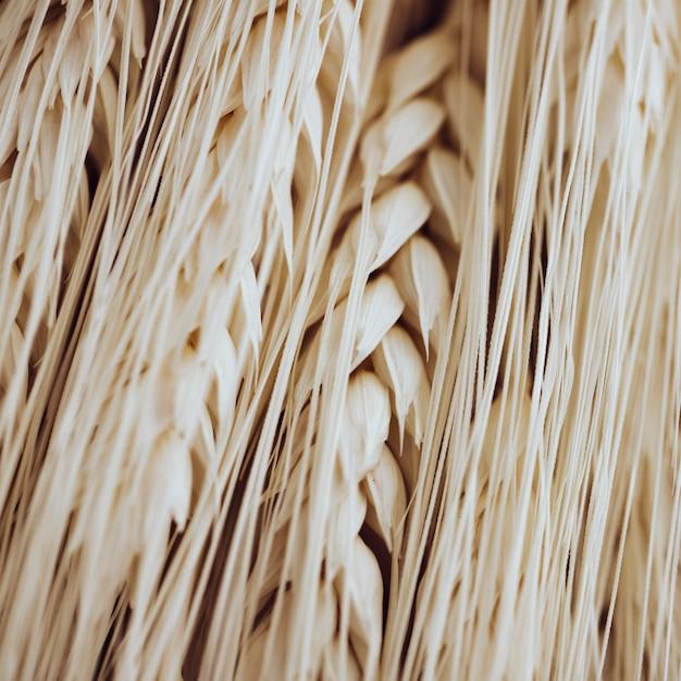 Muchas fibras de trigo ligero y granos Foto gratis