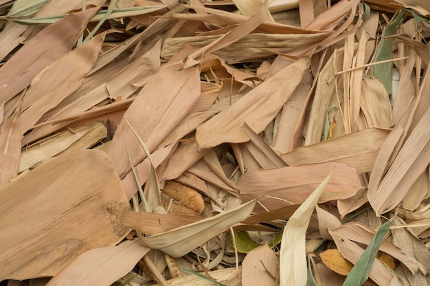 Muchas Hojas De Bambu Seco Como Fondo Descargar Fotos Premium - Bambu-seco