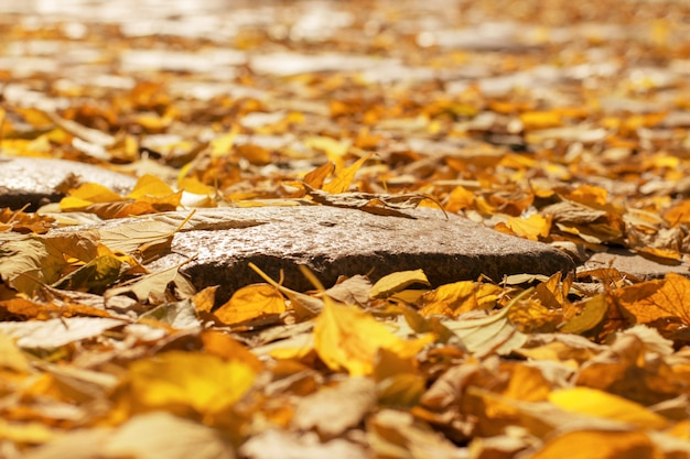 Muchas hojas de otoño en el camino. Foto Premium
