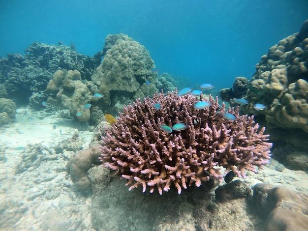 Muchos peces con arrecifes de coral y corales duros. Foto Premium