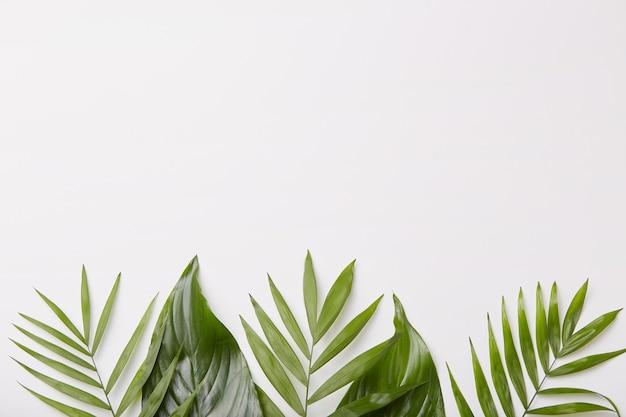 Muestra horizontal de hermosas hojas verdes en la parte inferior de la toma, espacio en blanco para su contenido promocional o publicidad Foto gratis