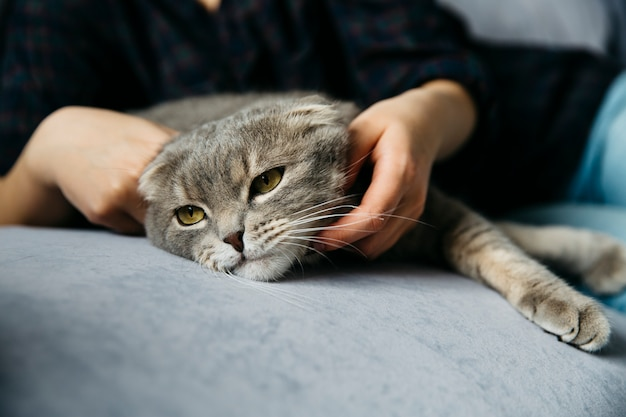 Mujer acariciando adorable gato perezoso Foto gratis