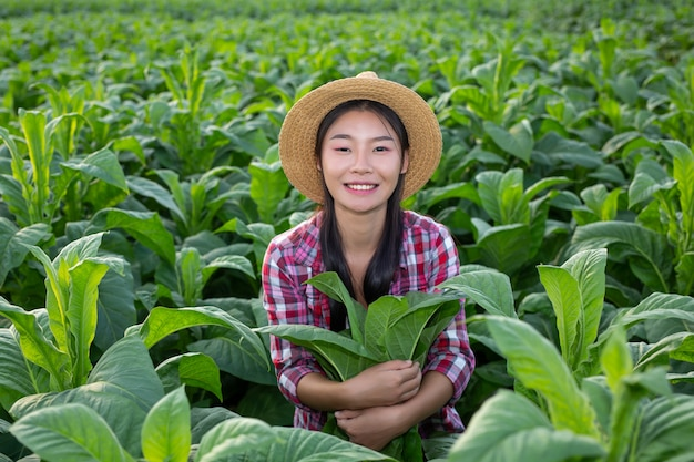 Mujer agricultora ve tabaco en el campo. Foto gratis